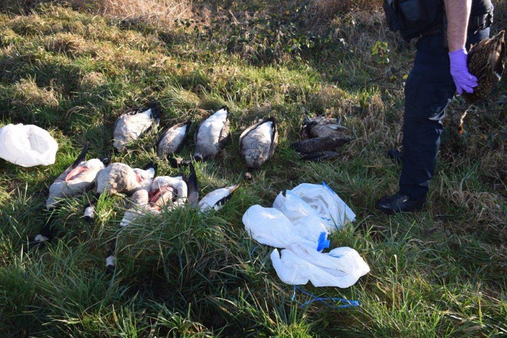Sgt. Plummer reflects on the wastefulness of the dumped waterfowl.