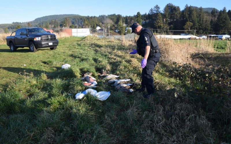 OSP responding to the report of wasted waterfowl